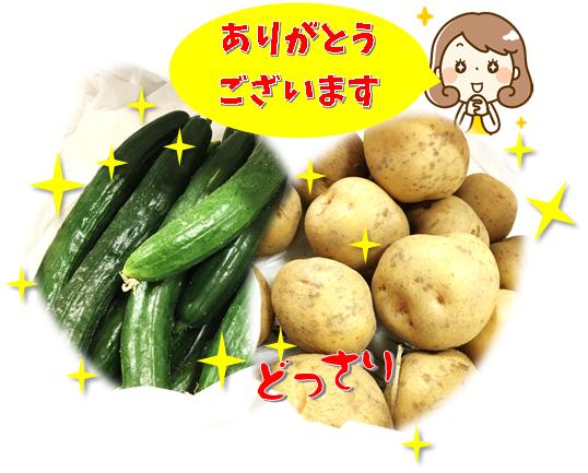 きゅうりとジャガイモ